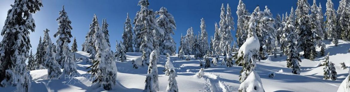 Trees In Snow Grouse Mountain GM037A