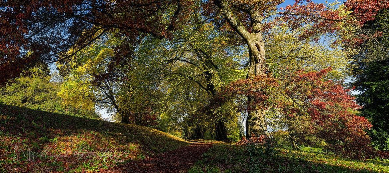 Fall Majestic Trees MT289A
