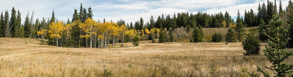 Aspen Grove Bow Valley