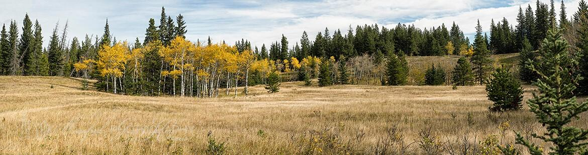 Aspen Grove Bow Valley AG386A