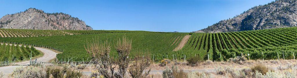 NK MIP Vineyards Pano
