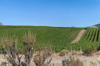 NK MIP Vineyards Pano 0V098A