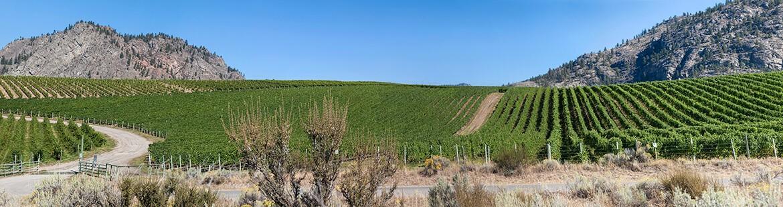 NK MIP Vineyards Pano 0V098A