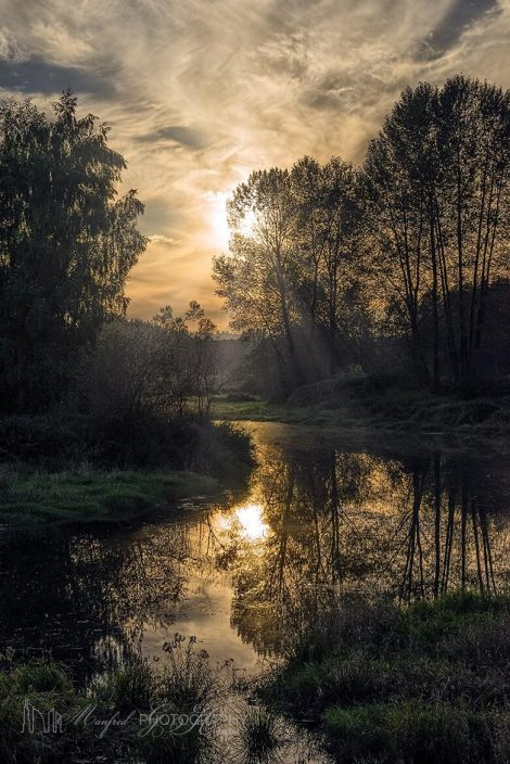 Sunset Meadow Sunrays SS449A
