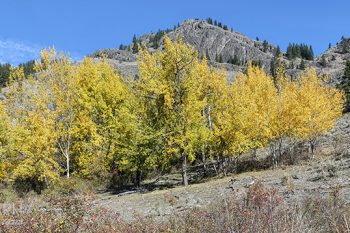346Fall_Colours_Okanagan_FO336Aws