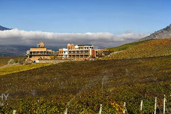 Burrowing_Owl_Vineyard_BO209A_ws