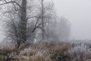 Fog_and Frost_442_ws