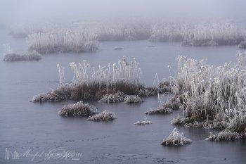 Foggy_Frosty_Meadows_451_ws