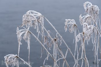 Frost_Covered_448_ws