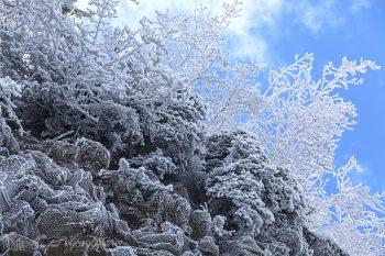 Frozen_9197