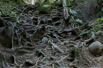 Lynn Canyon_Roots_LC069A_ws
