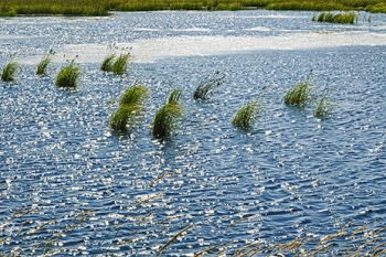 Ripples_Pano_RP158A_ws