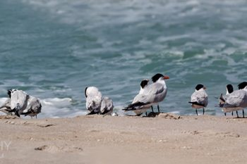 Terns_Beach_TB133A_ws