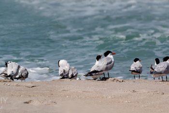 Terns_Beach_TB133A_ws