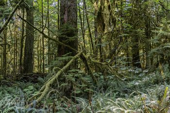 Cathedral_Grove_Park_CG272A_ws
